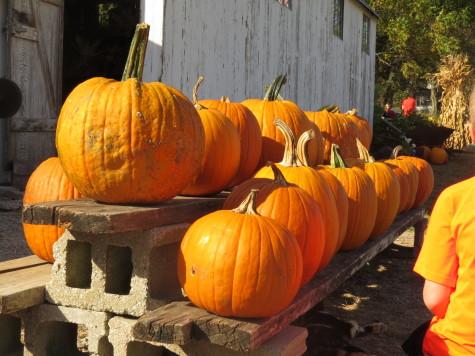 C.K. in K.C.: Pumpkins Etc.