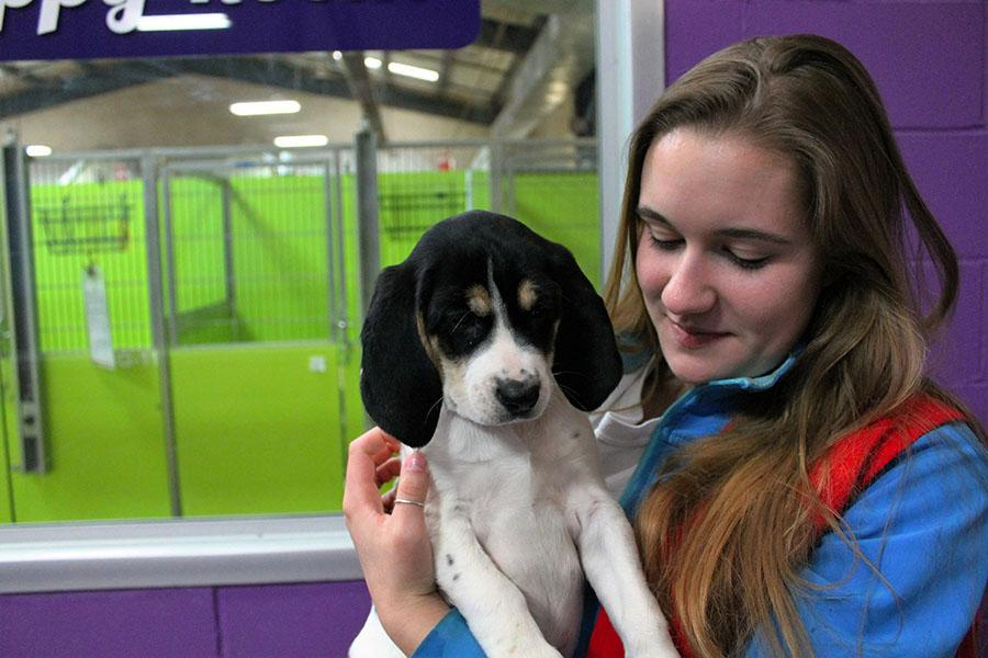 Junior Faith Palausky holds a puppy named Annabeth at Wayside Waifs on Jan. 25. Faith has fostered animals twice. photo by Meghan Baker