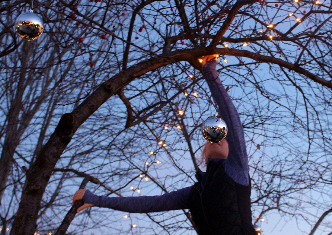 Senior Emma Fernandez carefully places Christmas lights on a tree in the quad. Students from the senior class gathered before school to hang lights and ornaments on the trees around campus. photo by Kat Mediavilla