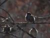 Birds sit on tree branches in Kansas City Feb. 2, 2014. photo by Maddy Medina