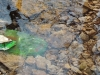 A plastic bottle rests on the bottom of a stream in a wooded area of Kansas City Dec. 18. photo by Maddy Medina