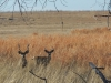 Two deer stand in the Rocky Mountain Arsenal National Wildlife Refuge in Denver, CO Feb. 12. photo by Maddy Medina