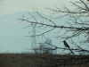 A bird perched on a tree branch at the Rocky Mountain Arsenal National Wildlife Refuge in Denver, CO Feb. 12. photo by Maddy Medina