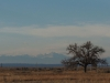 Scenery from the Rocky Mountain Arsenal National Wildlife Refuge in Denver, CO Feb. 12. photo by Maddy Medina