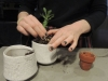 Senior Grace Girardeau re-pots plants at her house in Kansas City Feb. 18. photo by Maddy Medina