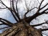A tree in Kansas City Feb. 19. photo by Maddy Medina