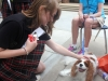 Junior Elizabeth Zirkel pets a dog at the PAW Club booth at the club fair Aug. 23. photo by Paige Powell