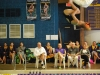 Prochnow does a front flip at the Swim and Dive meet against Blue Springs High School. Prochnow technically qualified at the Lee's Summit meet at the same time as Armstong, but due to a math error she didn't qualify. photo by Libby Hutchinson