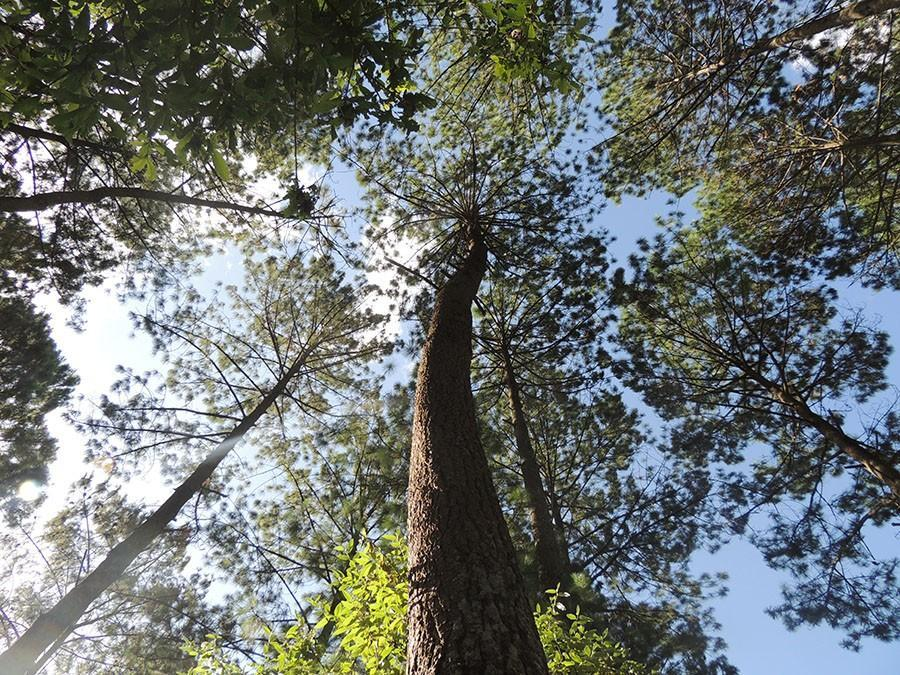 Trees in a forest of Chimaltenango, Guatemala July 23, 2014. photo by Maddy Medina