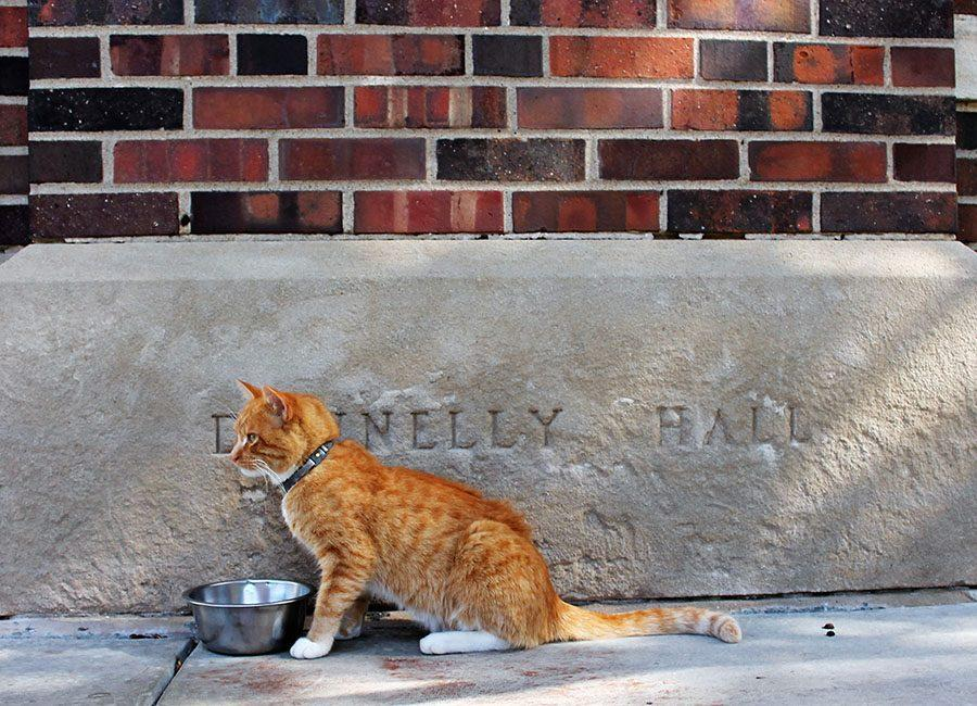 Truman, the campus cat, sits on the steps of Donnelly Hall at St. Teresa's Academy on Oct. 17. Truman can be seen daily around campus. photo by Meghan Baker