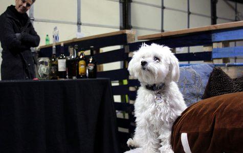 Bar K will pup-up in Berkley Riverfront Park