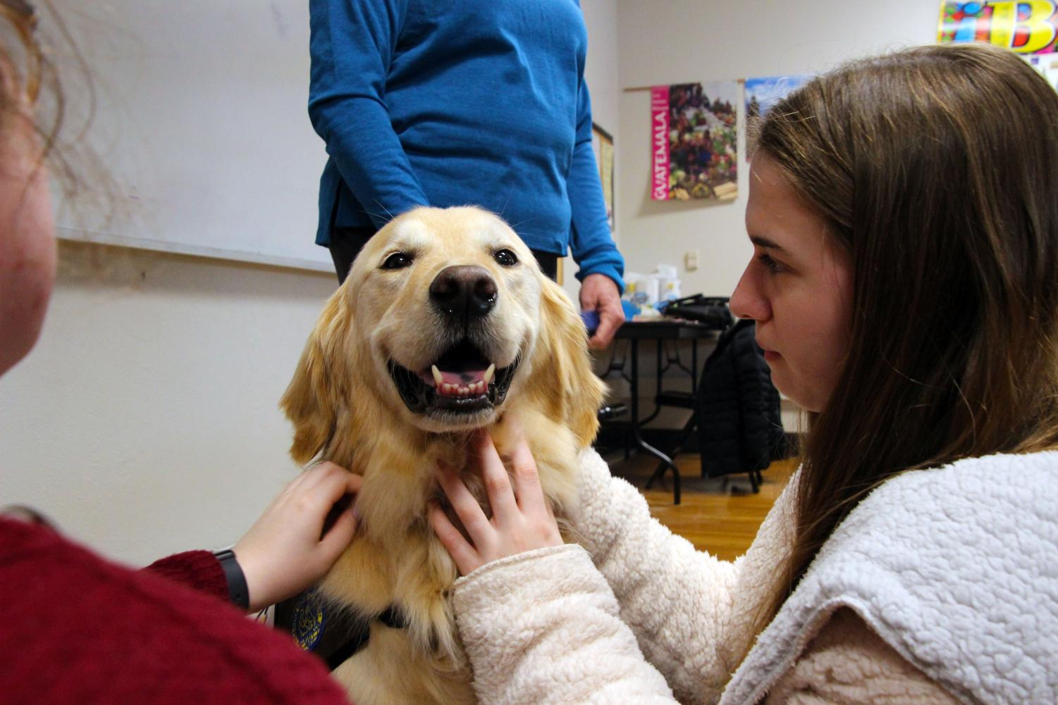 Students in STA's PAW Club pet therapy dog, Bode Jan. 18. Bode will begin weekly visits. photo by Olivia Wirtz