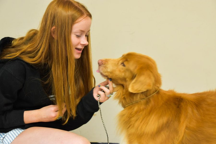 Junior Ellie Hatley coos at her dog, Clyde, while waiting for her turn in showing practice, Oct 1. Banksy is a Nova Scotia Duck Toy Retriever, which is known to be a hyper-active breed. photo by Claire Smith