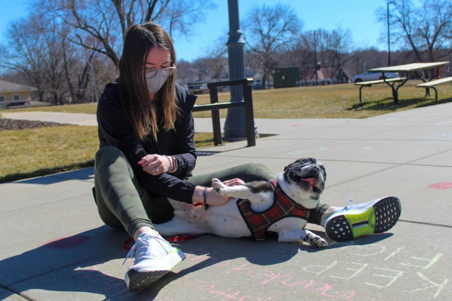 Watts gives Winston a belly rub in the Quad March 3. According to Watts, she wanted a French bulldog for a very long time before getting Winston, but had to be careful about where she adopted him because of concerns of health issues. photo by Carmon Baker