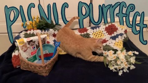 A picnic for one, my cat.